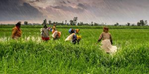 Agriculture_and_rural_farms_of_India-e1548392979838